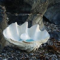 Giant Clam Shell Lamp | Shell Table Lamp | Beach Lamp